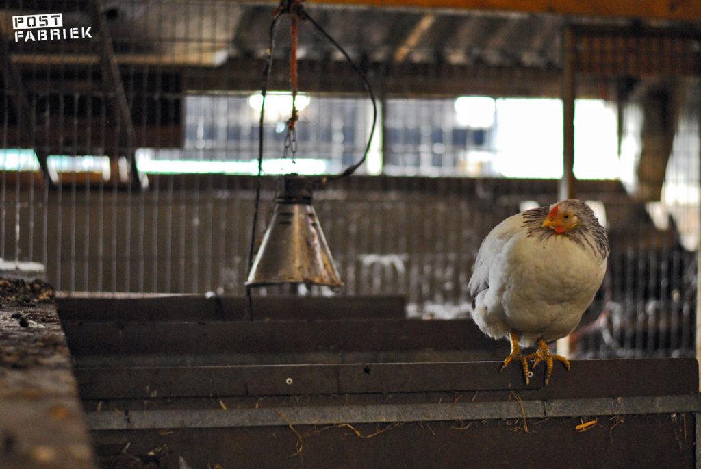 Een veer van de kip en een stukje eierschil
