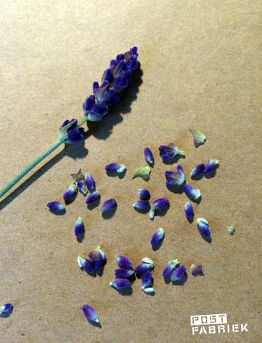 Met wat lavendel in het zakje hoopte ik een lekker geurtje mee te sturen