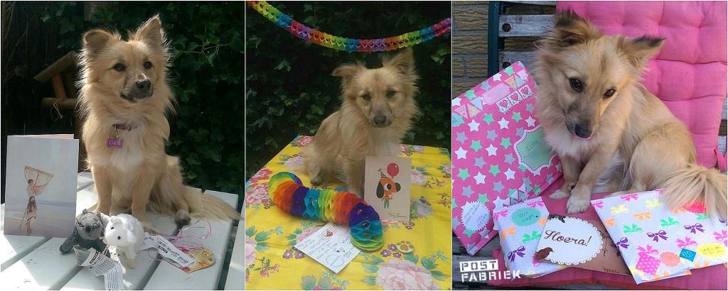Lupa met haar verjaardagspost