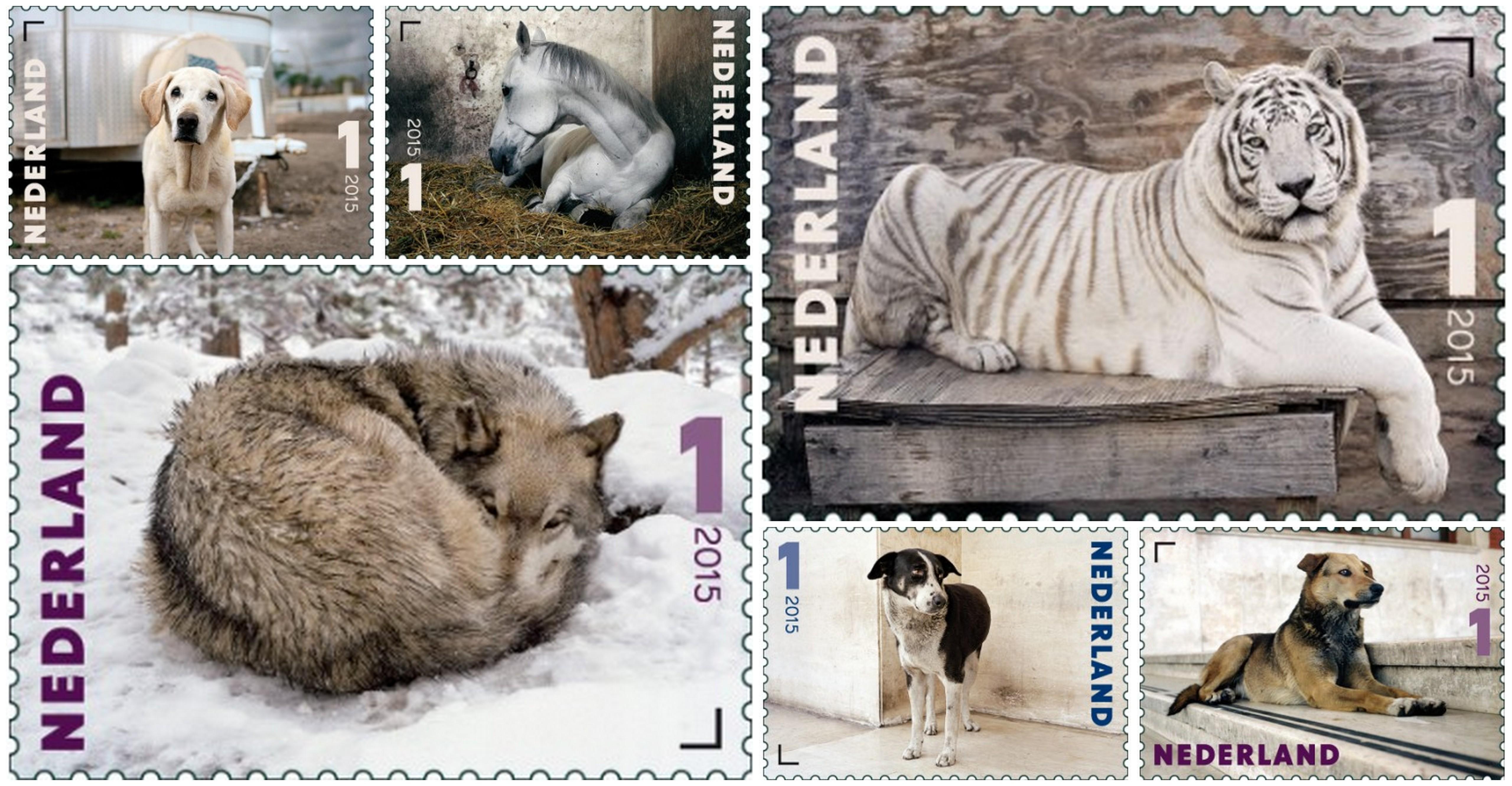 waarde kinderpostzegel 2013