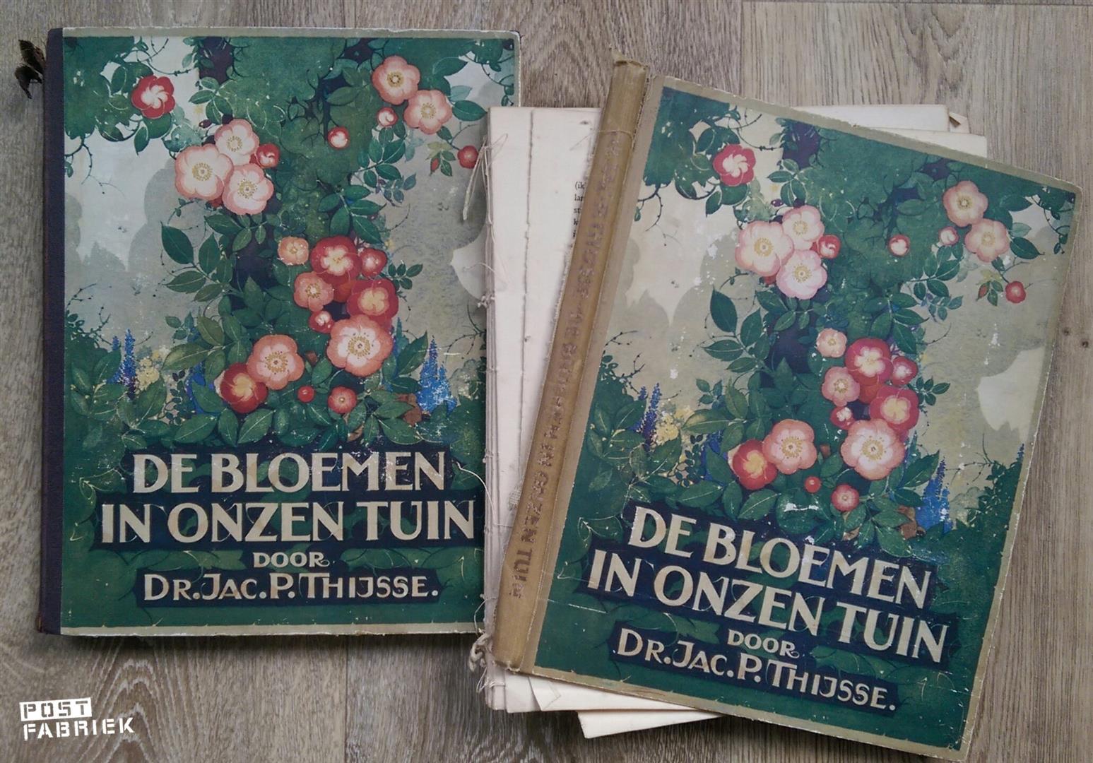 Bloemen in onzen tuin