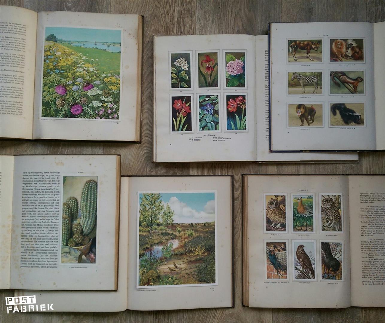 Van links naar rechts: Groote Rivieren, Kamerplanten, Dierenleven in Artis, Cactussen, Waar Wij Leven en Boerdery