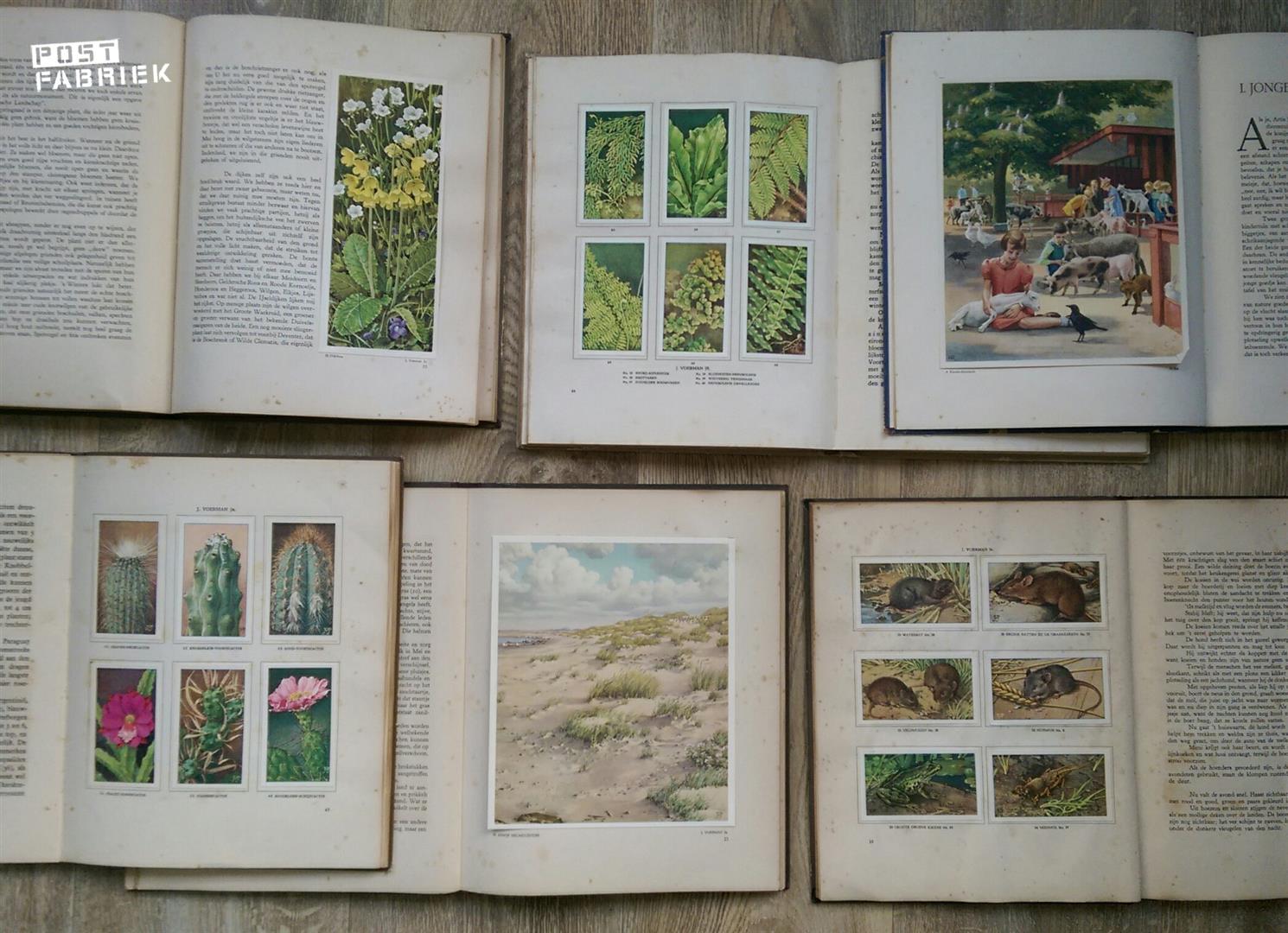 Van links naar rechts: Waar wij leven, Kamerplanten, Dierenleven in Artis, Cactussen, Onze Groote Rivieren en Boerdery