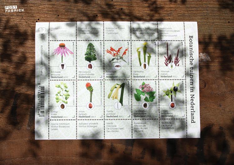 Oude Botanische Prenten : ≥ antieke botanische prent druiven jaar oud curiosa
