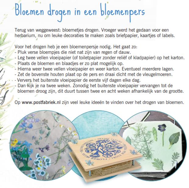 Close-up van vernoeming bloemen drogen in Dagblad van het Noorden